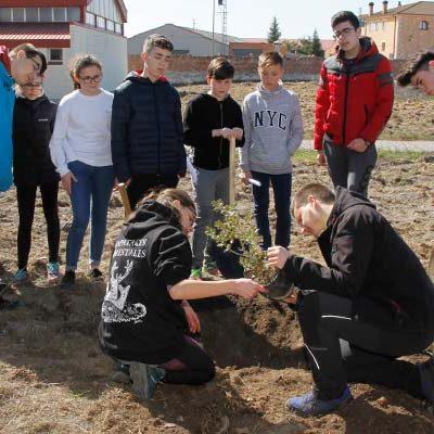 El IES Marqués de Lozoya inicia la repoblación del antiguo campo de fútbol