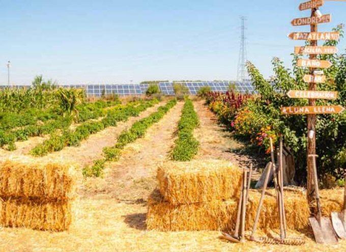 La Asociación Lala Branza pone en marcha una Huerta Escuela en Navas de Oro este verano
