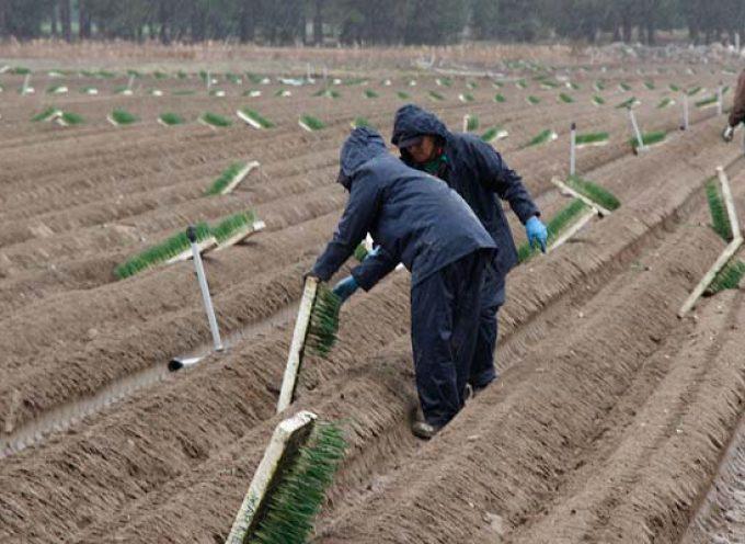UCCL Segovia denuncia que las medidas para los temporeros agrarios ponen en riesgo las labores en el campo