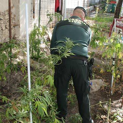 La Guardia Civil detiene a dos personas por tráfico de drogas y desarticula un laboratorio y un punto de venta de cannabis