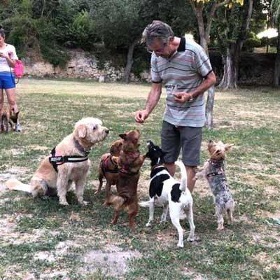 El colectivo SOS Animales Cuéllar reclama espacios a los que poder acudir con sus mascotas