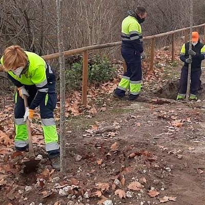 Medio Ambiente destina 4.400 euros a la plantación de 60 árboles en distintos espacios del municipio