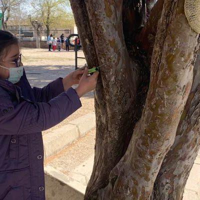 La primavera llegó en forma de poesías a los árboles del colegio San Gil