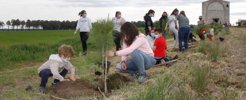La reforestación mejora el entorno de la ermita de san Mamés de Campo de Cuéllar