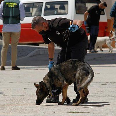 Un perro especializado buscó restos biológicos en Cuéllar en el domicilio del presunto autor del homicidio por arma blanca