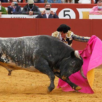 El Encierro concede el trofeo `Toro bravo´ a Taponero de la ganadería de Miura